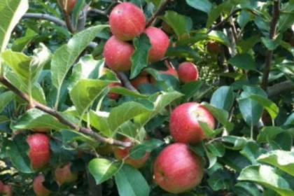 1 Day Bear Mountain,Seven Star Lake, Apple Picking and Maple Tour